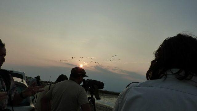 A l'aube comme au crépuscule, le groupe à pied d'oeuvre pour observer les limicoles