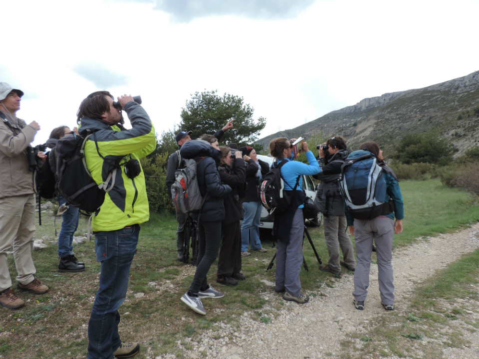 Observation des vautours qui attendent la curée, tous regroupés © Marion Fouchard