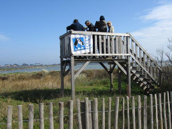 Permanence ornithologique sur la Route du Sel – 7 mars 2011