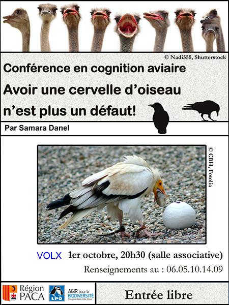 Conference en cognition aviaire