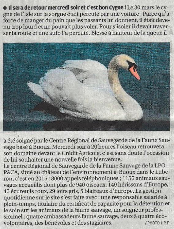 2016-04-19-La Provence-L'Isle sur la Sorgue-annonce du lâcher du cygne