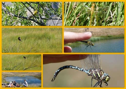 Aujourd'hui, l'ornithologie est un peu mise à l'écart...