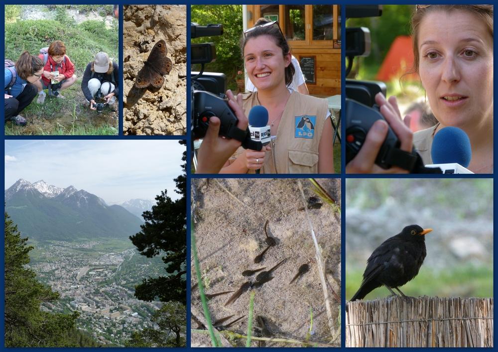 Quelques uns des meilleurs moments ce ce camp de prospection dédié à la biodiversité