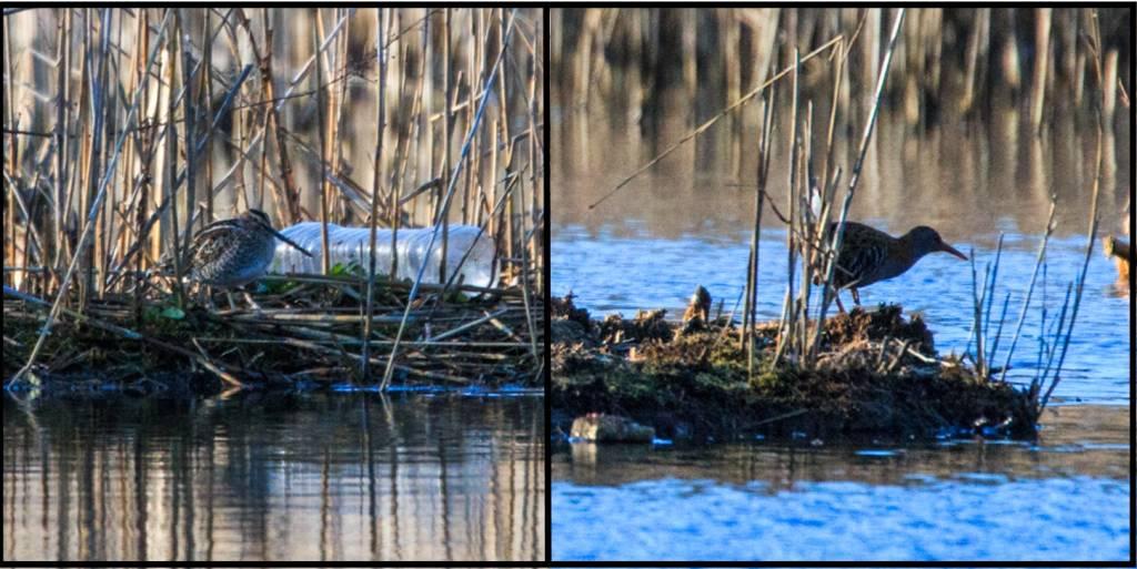 Wetland-Tourves-2015-Blog