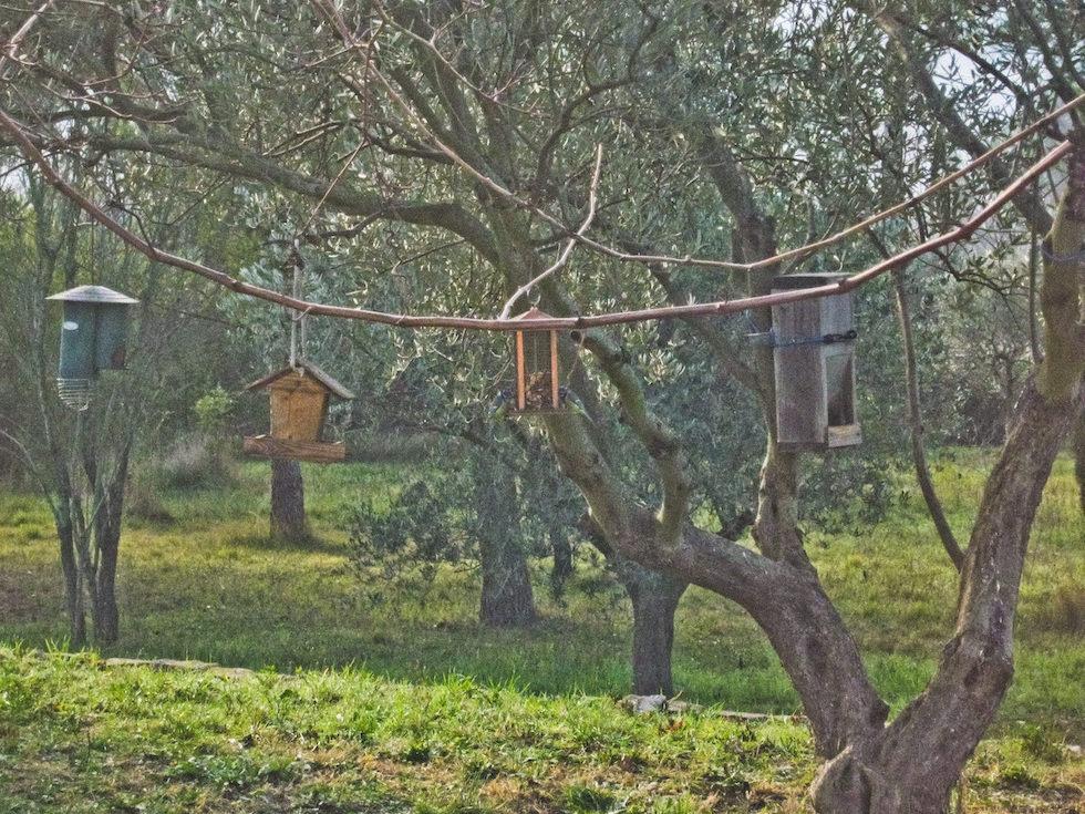 Comptage oiseaux des jardins 2016 for Jardin jardin 2016