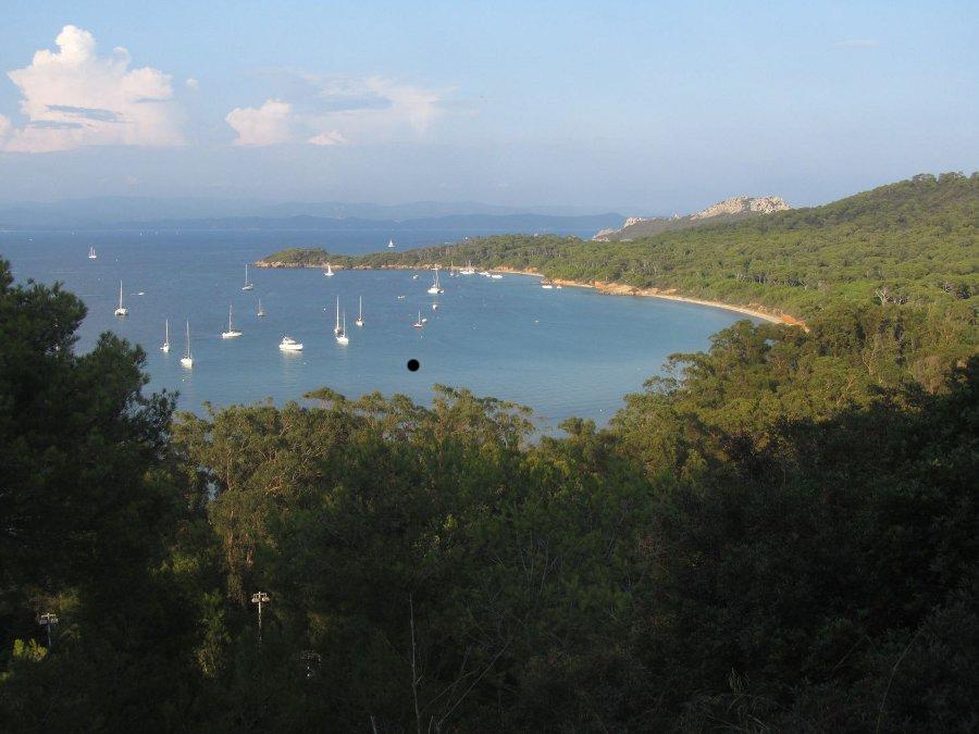 Faune-paca    Observatoire biodiversite