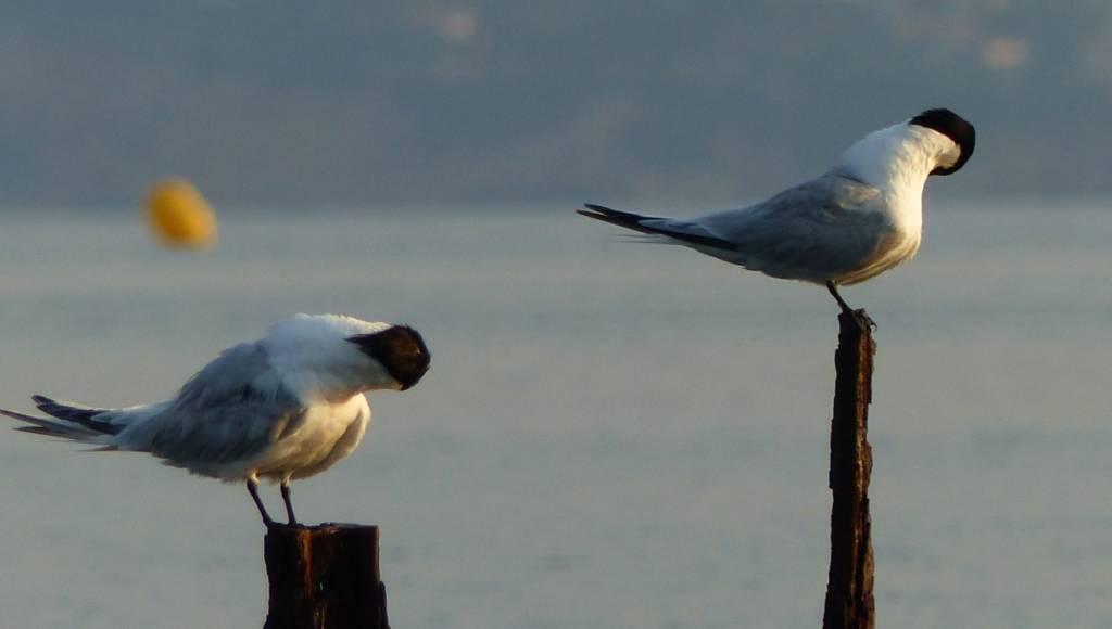 Journée Mondiale des Zones Humides à la lagune du Brusc