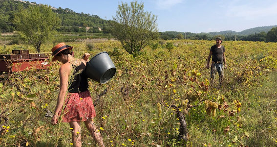 Viticulture naturelle
