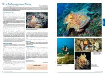Le poulpe commun - La Faune des Bouches-du-Rhône