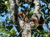 Relâchers d'écureuils