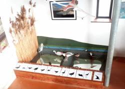 Maquettes taille réelle de l'Espace Nature des salins Hyères