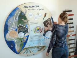 Le migrascope des salins d'Hyères
