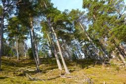 La réserve naturelle régionale des gorges de Daluis © Tangi Corveler