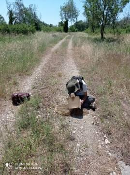 prospection entomologique