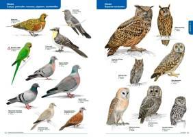 Rapaces nocturnes et autres oiseaux - La Faune des Bouches-du-Rhône