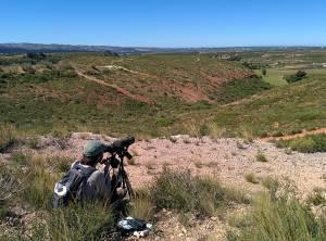 Point rapaces sur le plateau de Vitrolles en mai 2014 © Aurélie Johanet