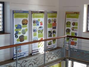 Exposition sur le dérèglement climatique et la biodiversité à l'espace nature des salins d'Hyères © Elise COUGNENC