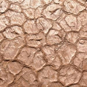 Les fentes de dessiccation affleurent à de nombreux endroits dans la réserve © Stéphanie Labouret