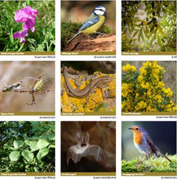 Atlas de la Biodiversité de Vence