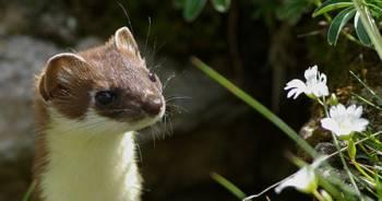 Atelier Sur la piste des animaux sauvage