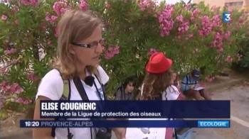 Reportage France 3 ^concernant l'enquête hirondelles 2014