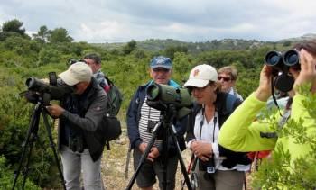 Formation d'initiation à l'ornithologie © LPO PACA