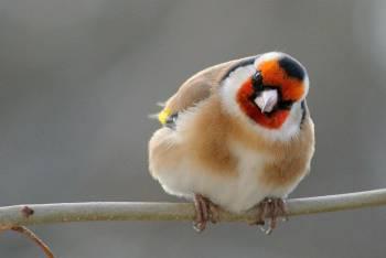 Atelier sur la piste des oiseaux
