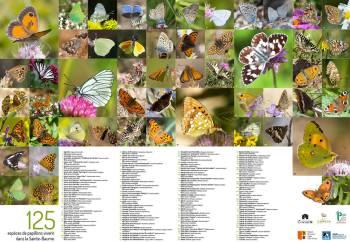 Carte découverte des papillons de la Sainte-Baume