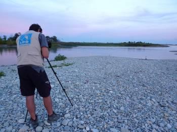 Inventaires ornithologiques embouchure du Var - photo Tangi Corveler