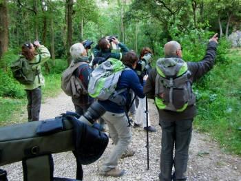 Formation Oiseaux des Alpilles dans le cadre du Life des Alpilles © Joanna Raffin