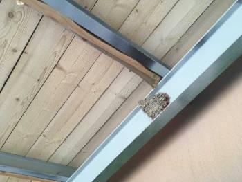 Un nid accroché à la nouvelle charpente © Morgane Berger
