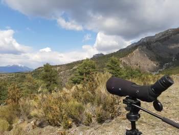 Observation ornithologique © LPO PACA