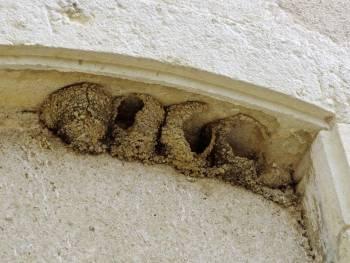 Nids d'hirondelles détruits © Daniel Jolivet CC BY 2.0