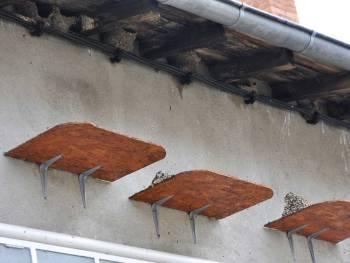 Planchettes sous nid d'hirondelles © Françoise ELOY