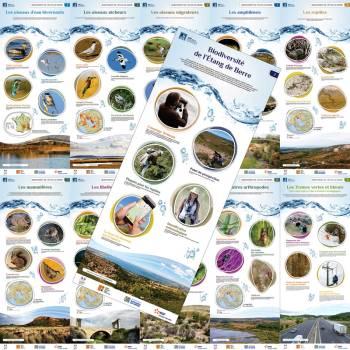 Biodiversité  de l'Étang de Berre