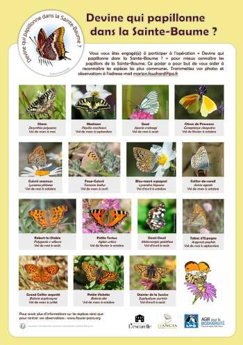 Poster des papillons de la Sainte-Baume
