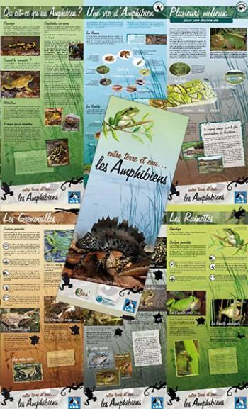 Exposition Entre terre et eau les amphibiens