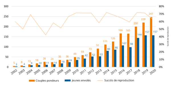 évolution de la colonie de Vautours fauves des gorges du Verdon de 2002 à 2020.