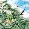 """Carte découverte """"Les oiseaux au coeur des vallées des Alpes d'Azur"""""""
