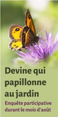"""Enquête participative """"Devine qui papillonne au jardin"""""""