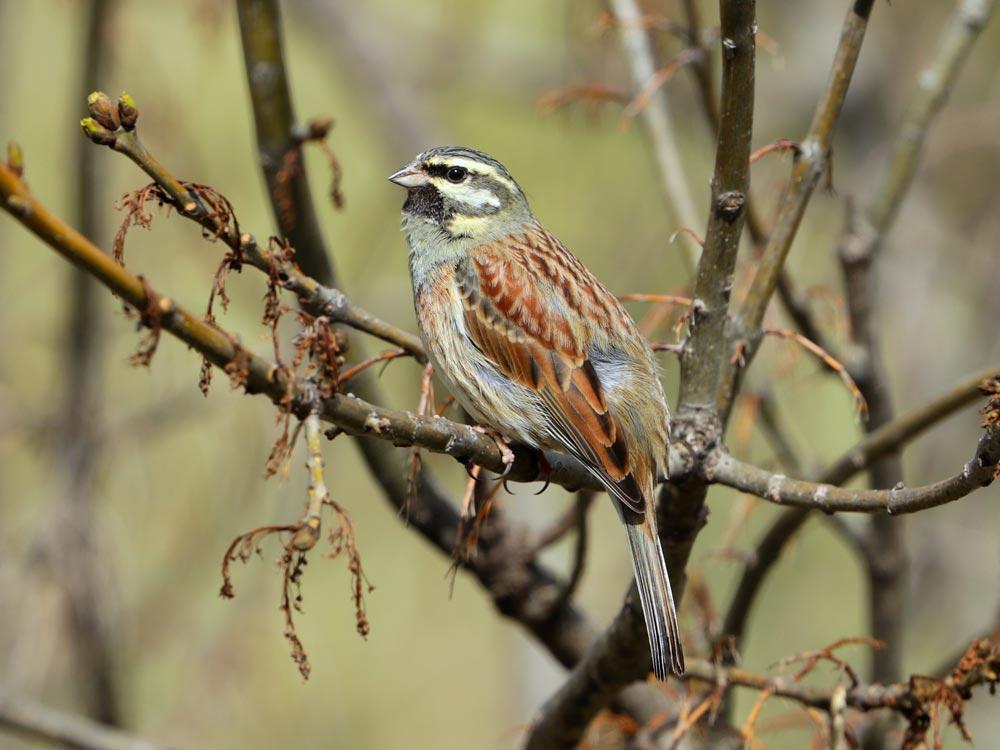 L'actualité ornithologique sur les Salins d'Hyères le 29 janvier 2020