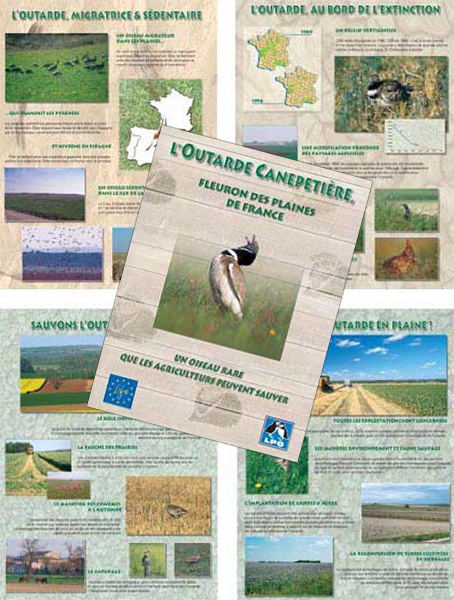 Exposition l'Outarde Canepetiere